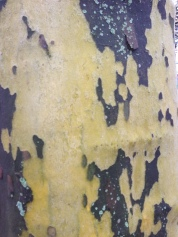 This is tree bark...looks like camouflage..interesting colours and shapes